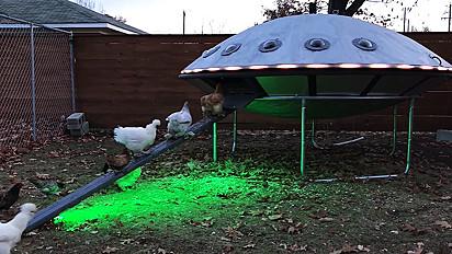 Galinheiro em formato de OVNI é construído por casal de artistas americano.