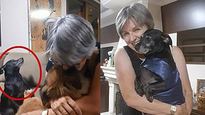 Rejane Rech, de Caxias do Sul, Rio Grande do Sul, grava vídeo fazendo ciúmes para o seu cão Joaquim e o pet tem a melhor reação.
