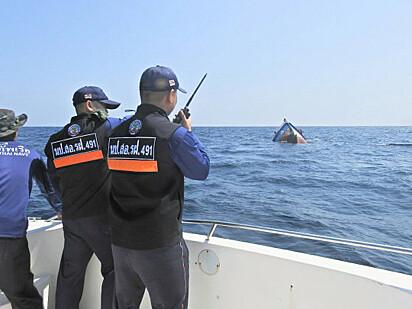 O marinheiro nadou cerca de 15 metros até chegar até os gatos no barco.