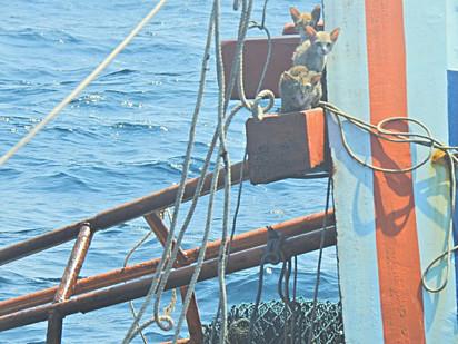 Quatro gatos ficaram presos no barco que estava afundando.