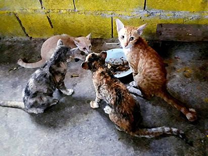 Felizmente nenhum dos gatos sofreram sérios danos, mas sim desidratação.