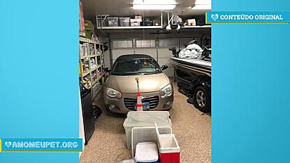 Cachorro se esconde em garagem e dona desafia internautas a encontrá-lo.