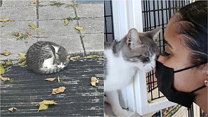 A gatinha foi resgatada perdida no quintal de uma casa em West Palm Beach, na Flórida (EUA).