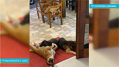 Restaurante de Ubatuba, São Paulo, permite a presença de cachorros de rua na sua porta.