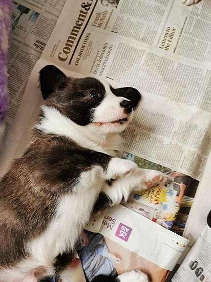 O roubo de cães tem sido frequente no mundo, pela alta procura desses animais durante a pandemia.