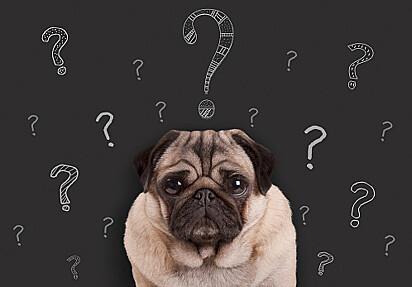 O que eu faria se eu fosse um cachorro?