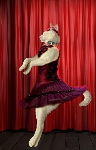 Esse bailarino é um gato.