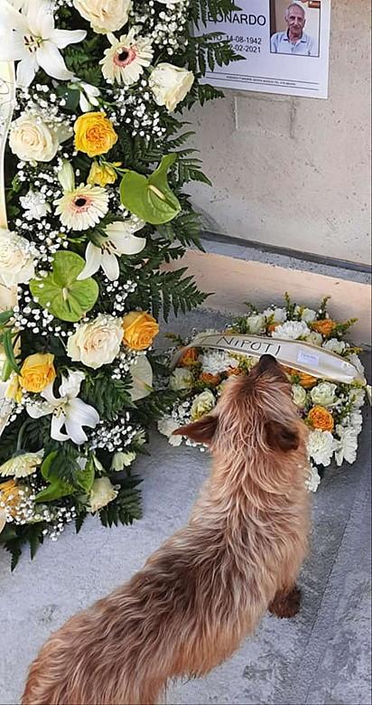 A cena do cachorrinho olhando a foto do seu amado dono é emocionante.
