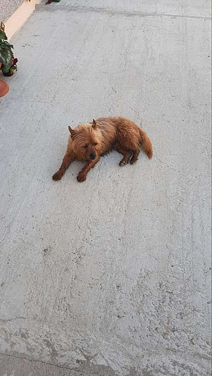 O cachorrinho Fulmine.