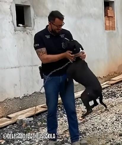 O cão não se conteve de alegria quando viu o delegado Matheus Laiola.
