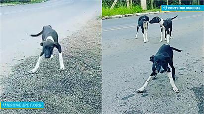 Flávia Motta, médica veterinária e voluntária, resgata 3 cães no Rio Grande do Sul.