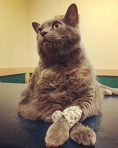 Recentemente foi descoberto que a gata Cinderblock tem um tumor de mastócito que requer atenção e um tratamento adequado.