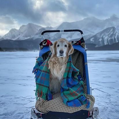 Quando era mais novo, o cãozinho aceitava qualquer trilha que seu tutor fosse.