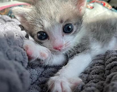 Finn, o gatinho.