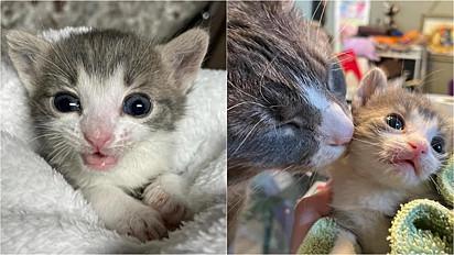 O gatinho Finn recebeu todo o apoio necessário para se recuperar.