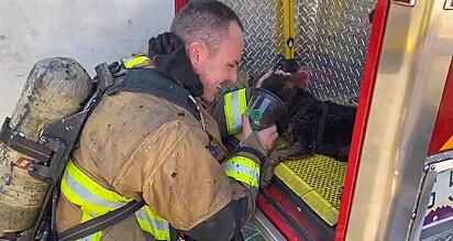 Um dos doguinhos recebendo oxigênio por uma máscara específica para animais.
