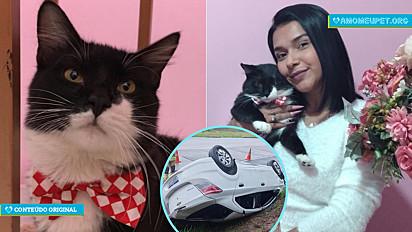 Mulher procura pelo paradeiro do seu gato que despereceu após carro capotar.