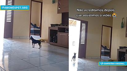Mulher deixa câmera escondida em sua residência para saber o que a sua cadela pinscher fazia.
