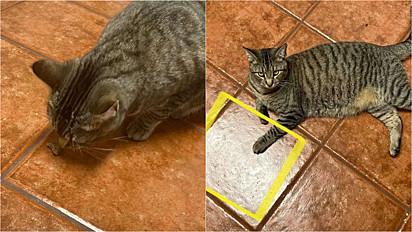 A gata Olivia e seu azulejo especial onde brota comida.