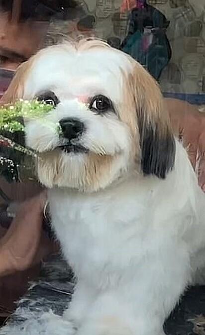 Quem resiste a esse olhar ao ser deixado no pet shop?