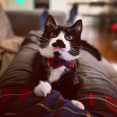 O gato Nigel.