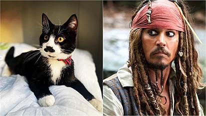 O gatinho é comparado com o Jack Sparrow.