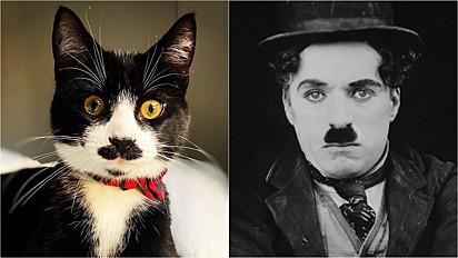 O gatinho é comparado com o Charlie Chaplin.