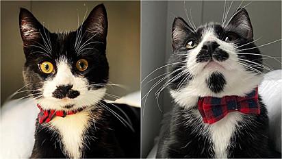 O felino que vive em Dalston, Londres, tem feito o maior sucesso com sua particularidade física: bigode e cavanhaque.