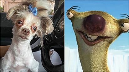 O cachorrinho é comparado ao Sid do filme Era do Gelo.