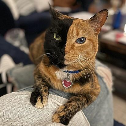 A gatinha foi adotada em setembro de 2009.
