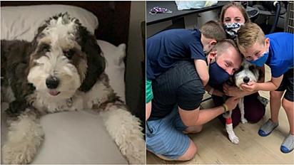 Comunidade se reúne para encontrar o cão de terapia perdido de uma criança de 7 Anos.