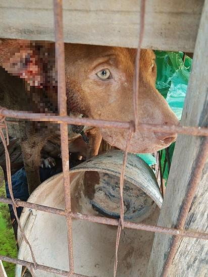 O resgate do pit bull aconteceu no dia 8 de março em Adamantina, São Paulo.