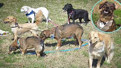 Dona compartilha post para reencontrar os irmãos do seu cachorro e os reúne em uma linda festa.