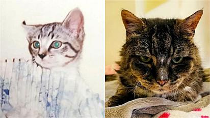 Gato desaparece por 20 anos e falece dois dias depois de ser reencontrado.