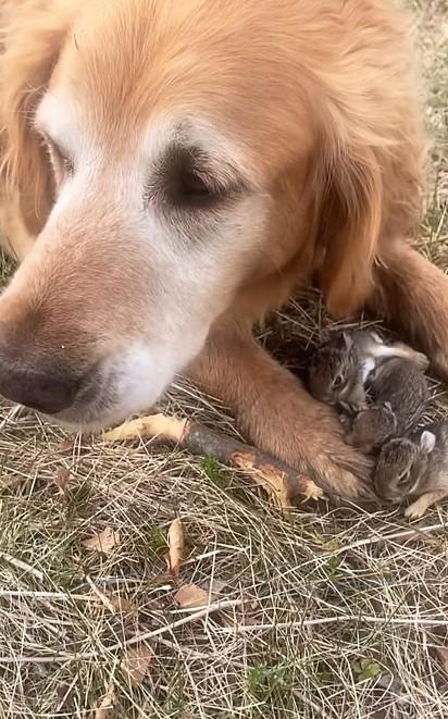 Os filhotes são do tamanho da pata de Otis.