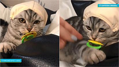Gato ganha bico e impede que a sua dona o tire da boca.
