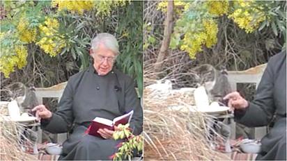 Gato come a panqueca do padre durante missa online.