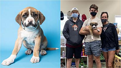 A boxer foi encontrada abandonada dentro de uma caixa e em poucos dias no abrigo a adorável cachorrinha ganhou um lar.
