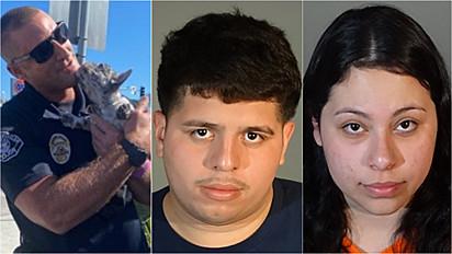 Cão foi roubado por um casal e imediatamente a polícia de Redondo Beach, Califórnia (EUA) começou as buscas, encontrando-o.