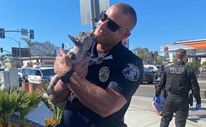 Um oficial de Redondo Beach segura o buldogue francês, após ser resgatado no dia 12 de março de 2021.