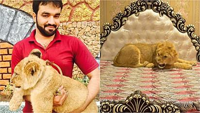 Homem adota leão como animal de estimação em Multa, no Paquistão.