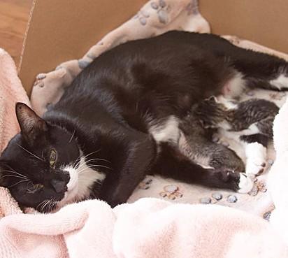 A gatinha deu à luz a dois filhotes.