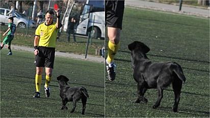 O cachorrinho preto invade partida de futebol e depois da quarta interrupção ganha cartão vermelho do árbitro.