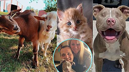 Nicole Wulfekuhle e o seu marido Dean criaram o santuário de animais Legado de Lennon em Minnesota, Estados Unidos.