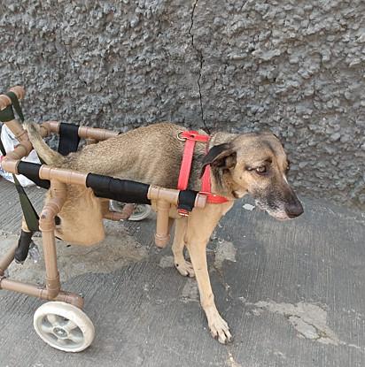 Estelinha antes de ser resgatada por Silvana. Ela chegou a usar a cadeira de rodas, mas não se adaptou, então passou a viver se arrastando pelo chão.
