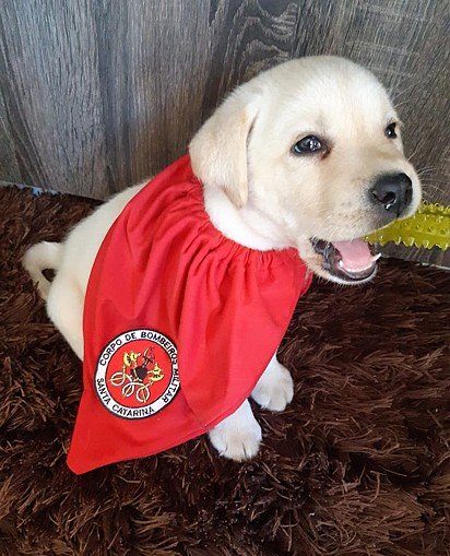 Bob tem 54 dias e começará seu treinamento de busca e resgate.