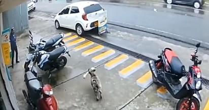 O cachorro em uma ação rápida foge da loja.
