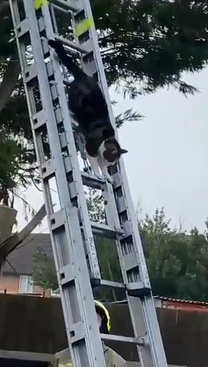 O Corpo de Bombeiros foi acionado para resgatar o felino.