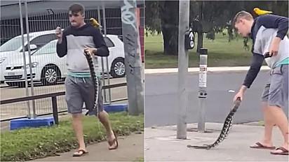Homem é visto carregando uma cobra e um papagaio pelas ruas de Windsor, Austrália.