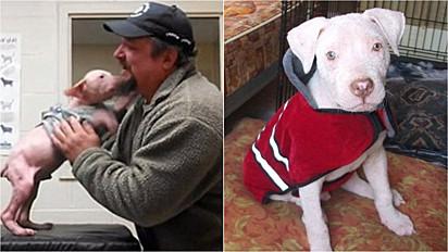Homem encontrou um filhote de pit bul com sarna nas ruas de Halifax, na Nova Escócia (Canadá). Levou-o para o abrigo e dias depois retornou para adotá-lo.